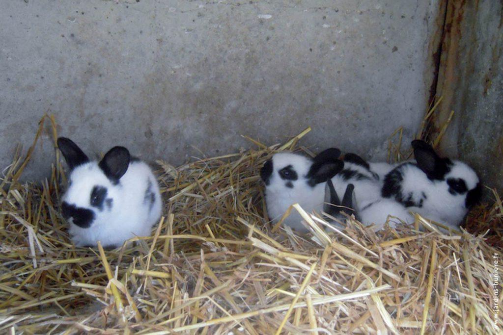 lapins, gîte, normandie